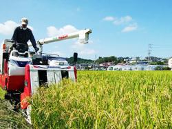 2017年一ノ蔵農社稲刈り風景「やまのしずく」